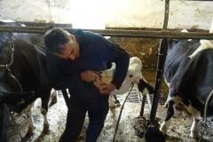 Herr Herhammer zeigt uns die Kauplatte einer Kuh